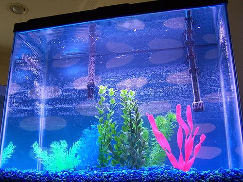 Vastu Fish Aquarium